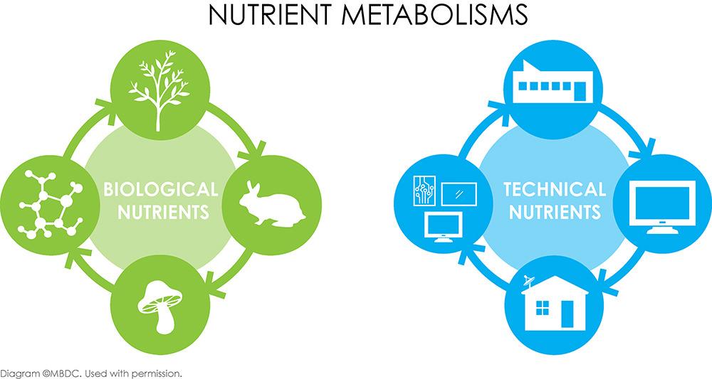 Nutrient Metabolisms Diagram, MBDC